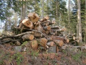 Holzhaufen unten